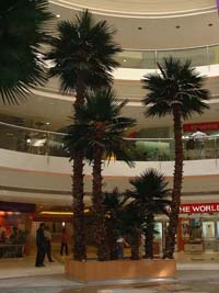 Fan Palm Forum Mall