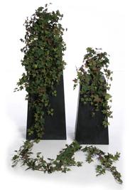 Sage Ivy Autumn